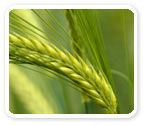 Jubilant Crop Nutrition Products