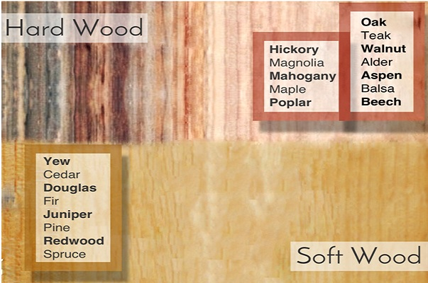 The curious case of hard wood and soft jacpl